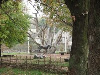 Historical and Cultural Complex «700-year-old oak of Zaporizhzhia»