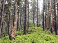 """National Park """"Skole Beskydy"""""""