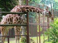 Kyiv Zoo