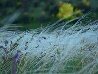Ландшафтный парк «Клебан-Бык»
